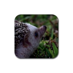 Standard Hedgehog Rubber Coaster (Square) from ArtsNow.com Front