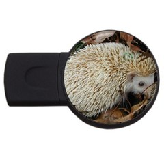 Hedgehog in Leaves USB Flash Drive Round (4 GB) from ArtsNow.com Front