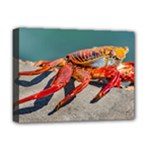 Colored Crab, Galapagos Island, Ecuador Deluxe Canvas 16  x 12  (Stretched)