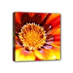 Annual Zinnia Flower   Mini Canvas 4  x 4  (Stretched)