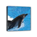 Swimming Dolphin Mini Canvas 4  x 4  (Stretched)