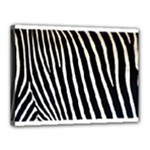 Zebra Print	Canvas 16  x 12  (Stretched)