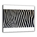 Zebra Print	Canvas 20  x 16  (Stretched)