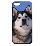 Use Your Photo Alaskan Malamute Dog Apple iPhone 5 Seamless Case (Black)