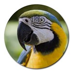 Handsome Parrot Round Mousepad