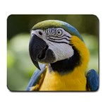 Handsome Parrot Large Mousepad