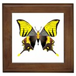 Butterfly M2 Framed Tile