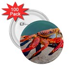 Colored Crab, Galapagos Island, Ecuador 2.25  Buttons (100 pack)