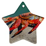 Colored Crab, Galapagos Island, Ecuador Star Ornament (Two Sides)