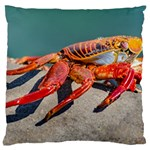 Colored Crab, Galapagos Island, Ecuador Large Cushion Case (One Side)