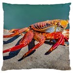 Colored Crab, Galapagos Island, Ecuador Large Flano Cushion Case (Two Sides)