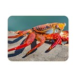 Colored Crab, Galapagos Island, Ecuador Double Sided Flano Blanket (Mini)