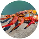Colored Crab, Galapagos Island, Ecuador Wooden Bottle Opener (Round)