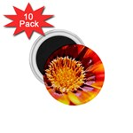 Annual Zinnia Flower   1.75  Magnet (10 pack)