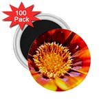 Annual Zinnia Flower   2.25  Magnet (100 pack)