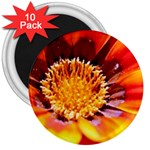 Annual Zinnia Flower   3  Magnet (10 pack)