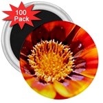 Annual Zinnia Flower   3  Magnet (100 pack)