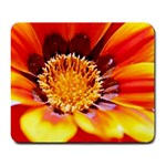 Annual Zinnia Flower   Large Mousepad