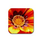 Annual Zinnia Flower   Rubber Square Coaster (4 pack)