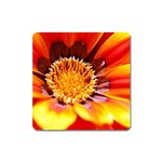 Annual Zinnia Flower   Magnet (Square)