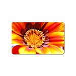 Annual Zinnia Flower   Magnet (Name Card)