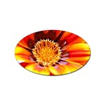 Annual Zinnia Flower   Sticker Oval (10 pack)