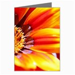 Annual Zinnia Flower   Greeting Cards (Pkg of 8)