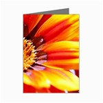 Annual Zinnia Flower   Mini Greeting Cards (Pkg of 8)