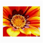 Annual Zinnia Flower   Glasses Cloth (Small)
