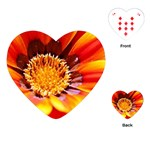 Annual Zinnia Flower   Playing Cards (Heart)