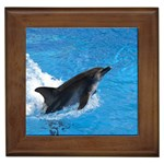 Swimming Dolphin Framed Tile