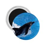Swimming Dolphin 2.25  Magnet