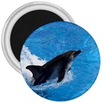 Swimming Dolphin 3  Magnet