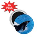 Swimming Dolphin 1.75  Magnet (10 pack)