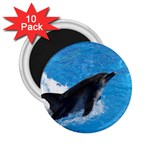 Swimming Dolphin 2.25  Magnet (10 pack)