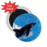 Swimming Dolphin 2.25  Magnet (100 pack)