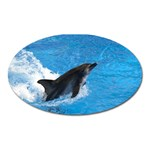Swimming Dolphin Magnet (Oval)