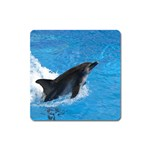 Swimming Dolphin Magnet (Square)