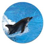 Swimming Dolphin Magnet 5  (Round)