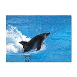 Swimming Dolphin Sticker A4 (10 pack)
