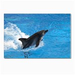 Swimming Dolphin Postcard 5  x 7