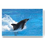 Swimming Dolphin Large Doormat