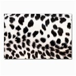 Snow Leopard	 Postcards 5  x 7  (Pkg of 10)