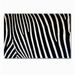 Zebra Print	 Postcards 5  x 7  (Pkg of 10)