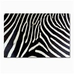 Zebra Print Big	 Postcard 4 x 6  (Pkg of 10)