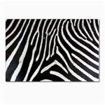 Zebra Print Big	 Postcards 5  x 7  (Pkg of 10)